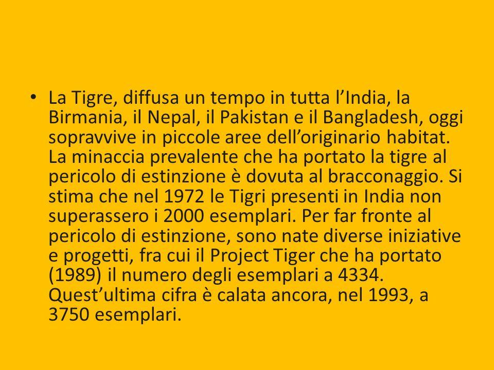 La Tigre, diffusa un tempo in tutta lIndia, la Birmania, il Nepal, il Pakistan e il Bangladesh, oggi sopravvive in piccole aree delloriginario habitat