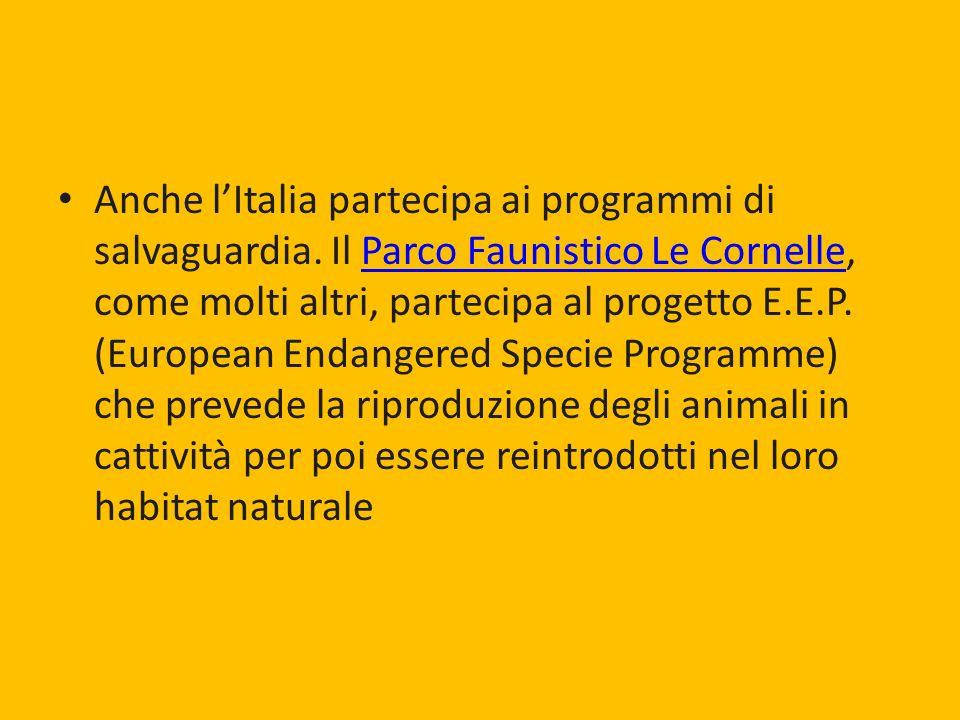 Anche lItalia partecipa ai programmi di salvaguardia. Il Parco Faunistico Le Cornelle, come molti altri, partecipa al progetto E.E.P. (European Endang