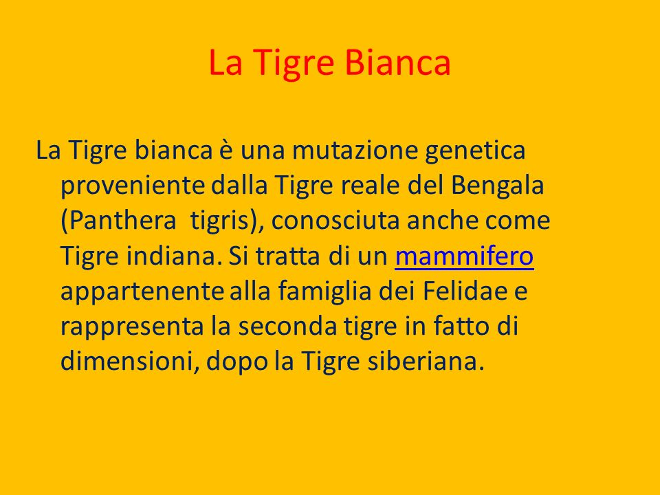 La Tigre Bianca La Tigre bianca è una mutazione genetica proveniente dalla Tigre reale del Bengala (Panthera tigris), conosciuta anche come Tigre indi