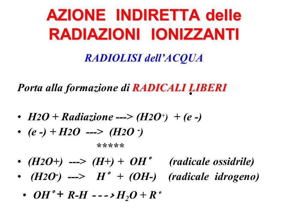 AZIONE INDIRETTA delle RADIAZIONI IONIZZANTI RADIOLISI dellACQUA RADICALI LIBERI Porta alla formazione di RADICALI LIBERI H 2 O + Radiazione ---> (H 2 O + ) + (e -) (e -) + H 2 O ---> (H 2 O - ) ***** (H 2 O+) ---> (H+) + OH° (radicale ossidrile) (H 2 O - ) ---> H° + (OH-) (radicale idrogeno) OH° + R-H ---> H 2 O + R °