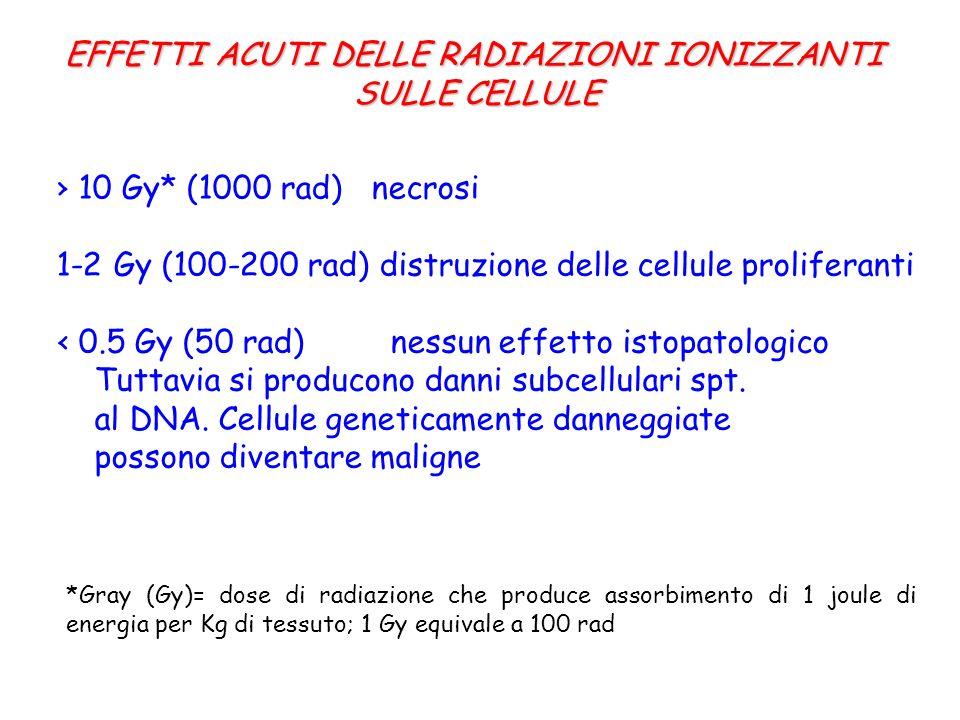 10 Gy* (1000 rad) necrosi 1-2 Gy (100-200 rad) distruzione delle cellule proliferanti 0.5 Gy (50 rad) nessun effetto istopatologico Tuttavia si producono danni subcellulari spt.