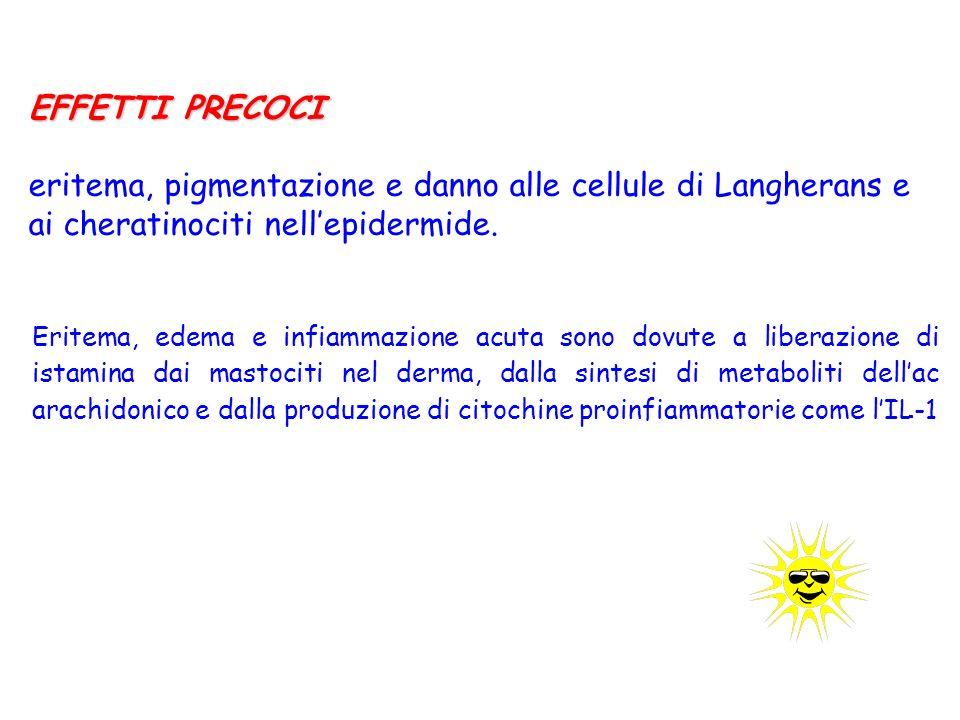 EFFETTI PRECOCI eritema, pigmentazione e danno alle cellule di Langherans e ai cheratinociti nellepidermide.