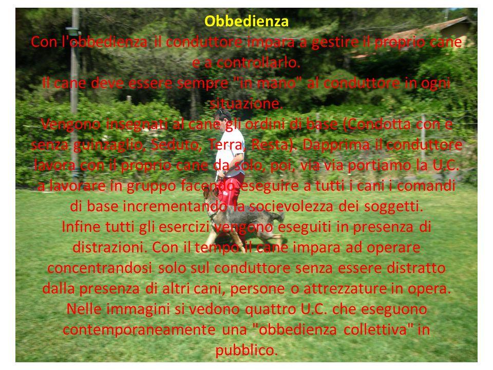 Obbedienza Con l'obbedienza il conduttore impara a gestire il proprio cane e a controllarlo. Il cane deve essere sempre