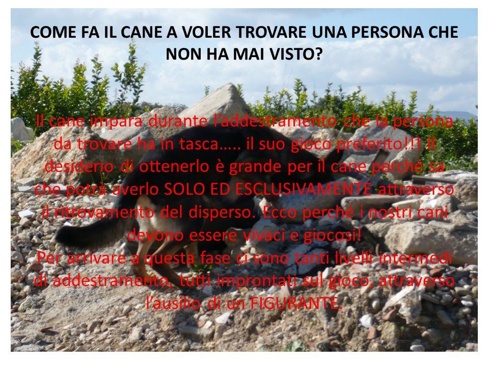 COME FA IL CANE A VOLER TROVARE UNA PERSONA CHE NON HA MAI VISTO? Il cane impara durante laddestramento che la persona da trovare ha in tasca….. il su
