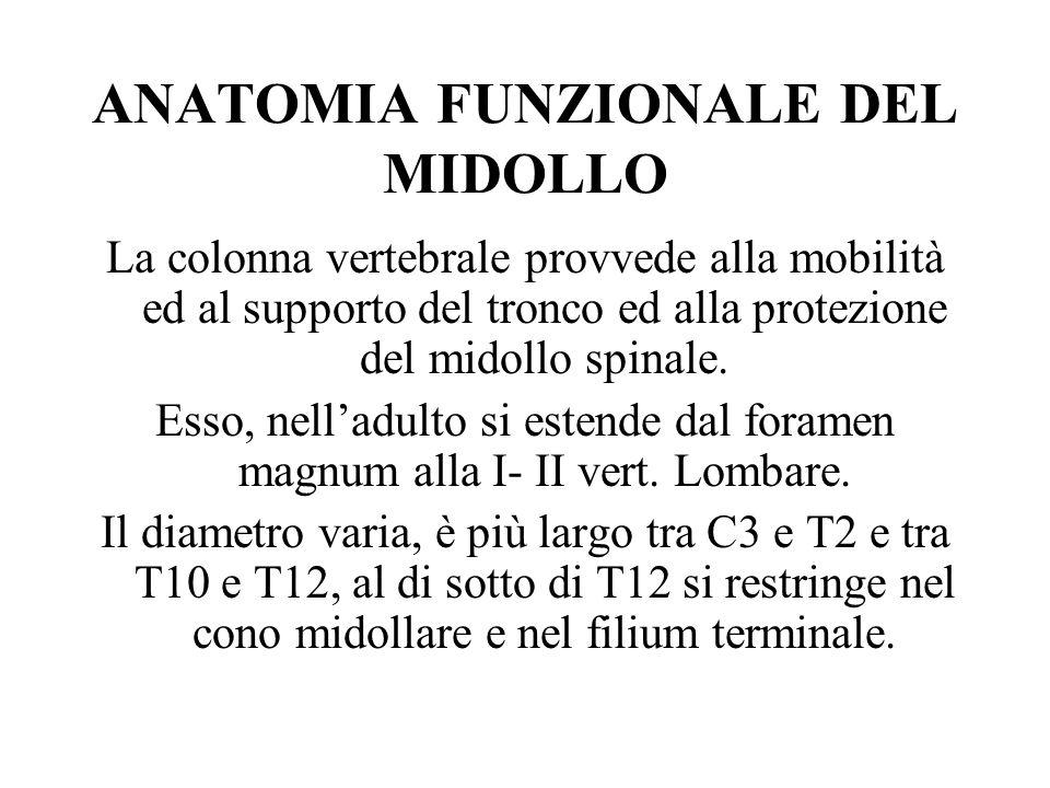 ANATOMIA FUNZIONALE DEL MIDOLLO La colonna vertebrale provvede alla mobilità ed al supporto del tronco ed alla protezione del midollo spinale. Esso, n