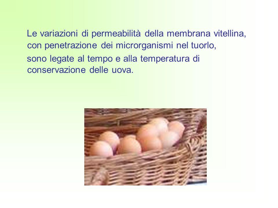 Le variazioni di permeabilità della membrana vitellina, con penetrazione dei microrganismi nel tuorlo, sono legate al tempo e alla temperatura di conservazione delle uova.
