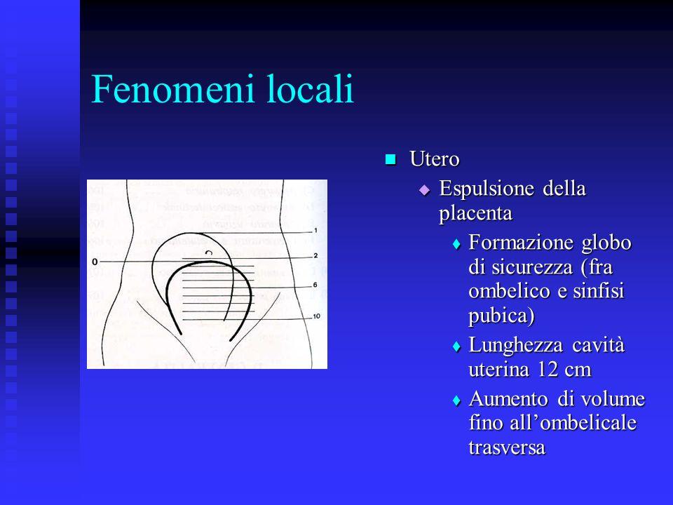 Fenomeni locali Utero Espulsione della placenta Formazione globo di sicurezza (fra ombelico e sinfisi pubica) Lunghezza cavità uterina 12 cm Aumento di volume fino allombelicale trasversa