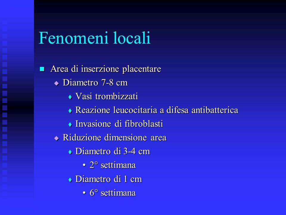 Fenomeni locali Area di inserzione placentare Area di inserzione placentare Diametro 7-8 cm Diametro 7-8 cm Vasi trombizzati Vasi trombizzati Reazione leucocitaria a difesa antibatterica Reazione leucocitaria a difesa antibatterica Invasione di fibroblasti Invasione di fibroblasti Riduzione dimensione area Riduzione dimensione area Diametro di 3-4 cm Diametro di 3-4 cm 2° settimana2° settimana Diametro di 1 cm Diametro di 1 cm 6° settimana6° settimana