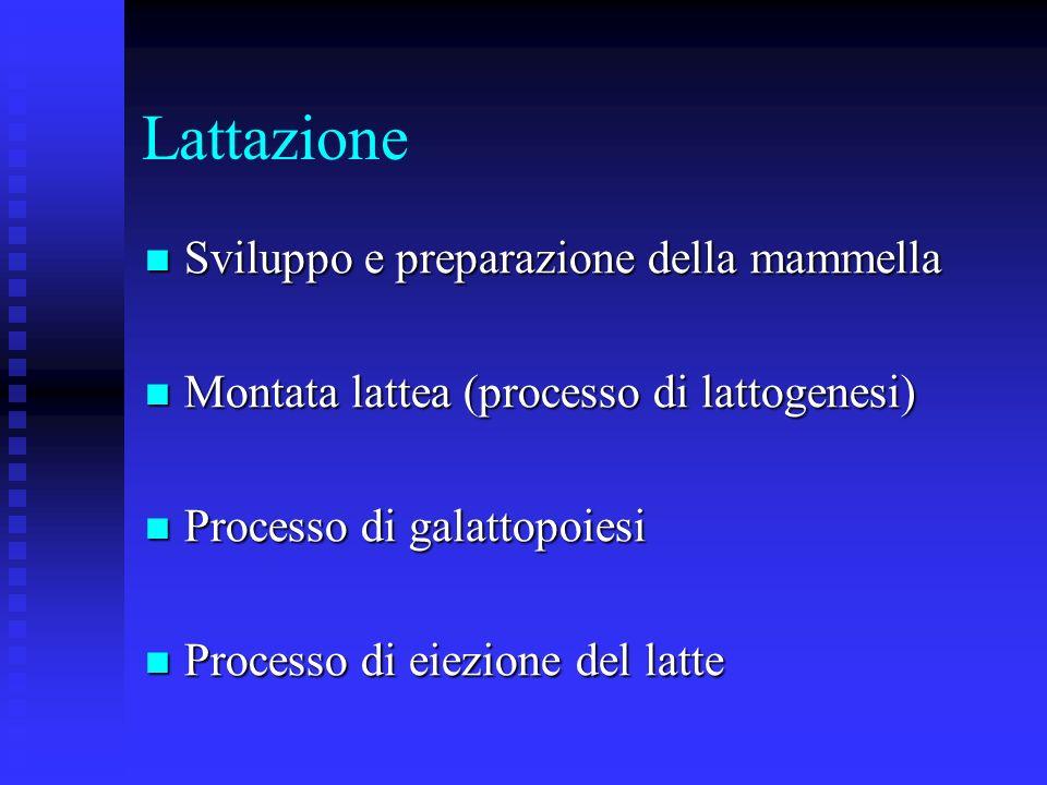 Lattazione Sviluppo e preparazione della mammella Sviluppo e preparazione della mammella Montata lattea (processo di lattogenesi) Montata lattea (processo di lattogenesi) Processo di galattopoiesi Processo di galattopoiesi Processo di eiezione del latte Processo di eiezione del latte
