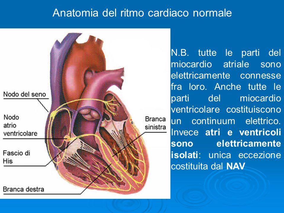 Anatomia del ritmo cardiaco normale N.B. tutte le parti del miocardio atriale sono elettricamente connesse fra loro. Anche tutte le parti del miocardi