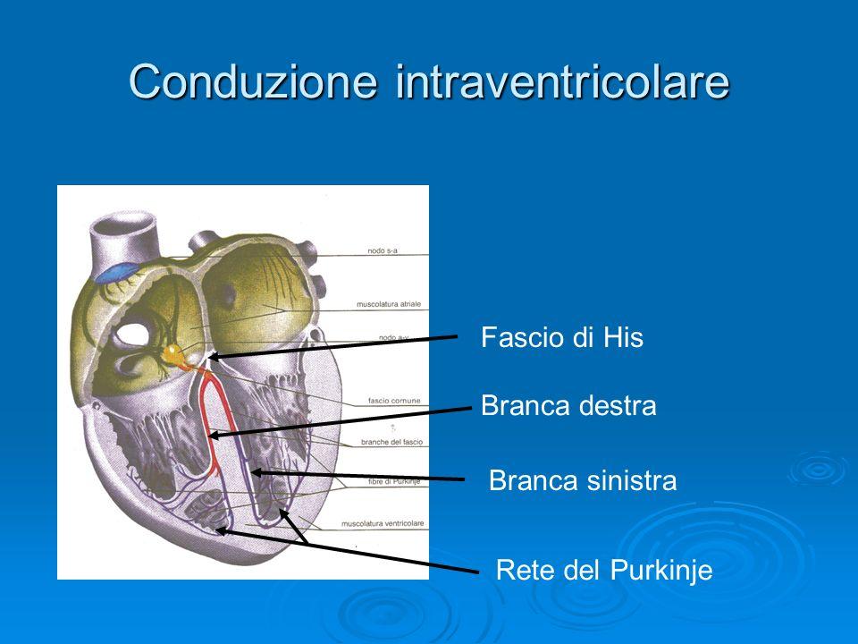Conduzione intraventricolare Fascio di His Branca destra Branca sinistra Rete del Purkinje