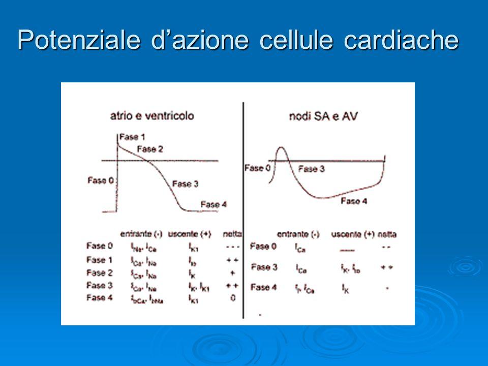 Potenziale dazione cellule cardiache