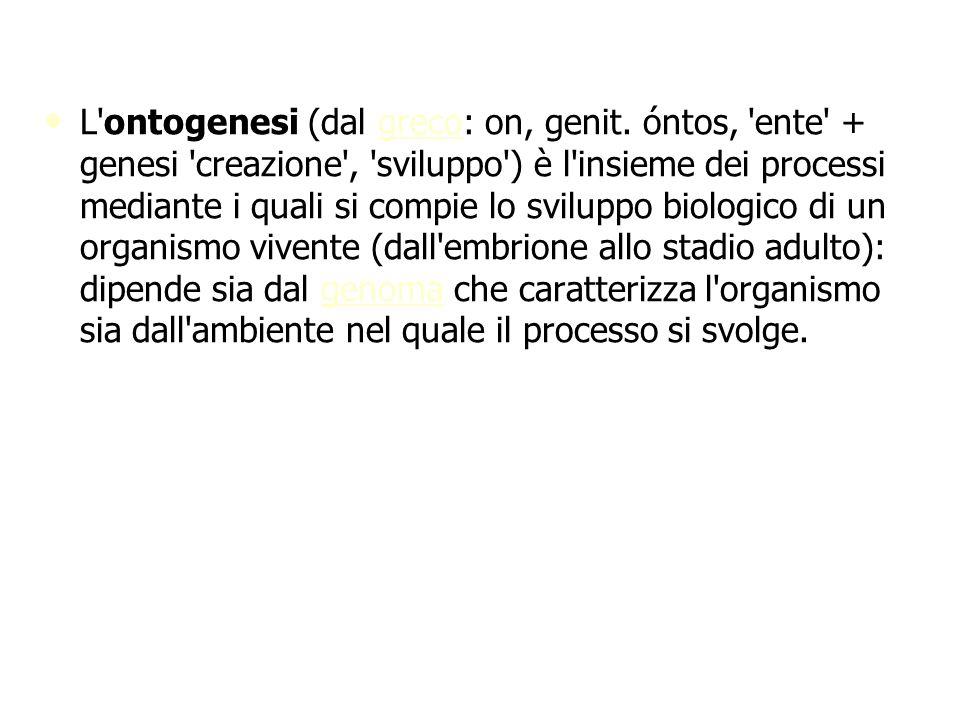 L'ontogenesi (dal greco: on, genit. óntos, 'ente' + genesi 'creazione', 'sviluppo') è l'insieme dei processi mediante i quali si compie lo sviluppo bi