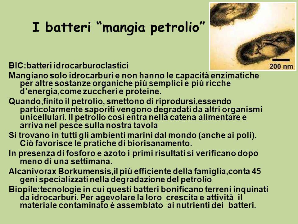I batteri mangia petrolio BIC:batteri idrocarburoclastici Mangiano solo idrocarburi e non hanno le capacità enzimatiche per altre sostanze organiche p