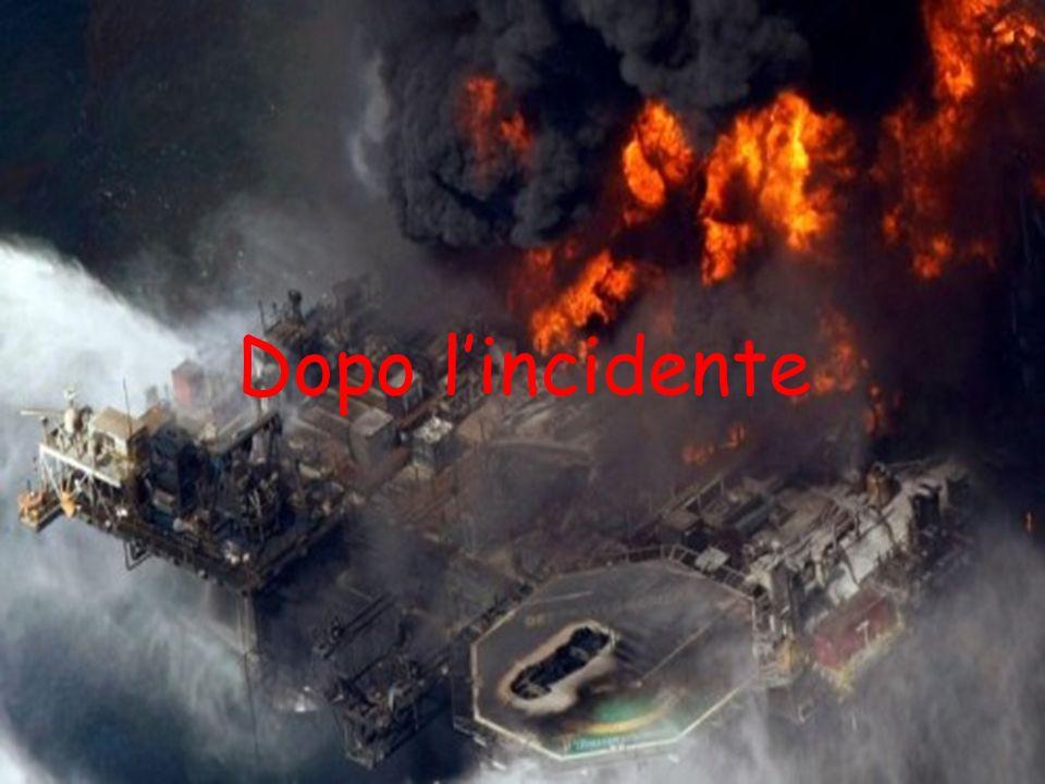 Le coste colpite dal disastro Questa immagine è stata pubblicata il 1 maggio 2010,quando ormai la Marea Nera minacciava seriamente le coste.