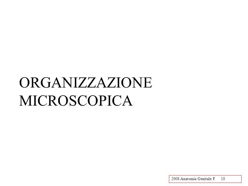 2008 Anatomia Genitale F10 ORGANIZZAZIONE MICROSCOPICA