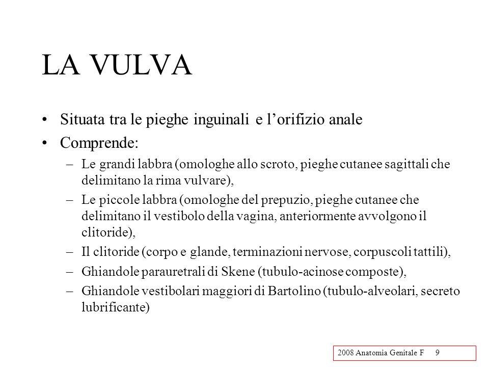 2008 Anatomia Genitale F9 LA VULVA Situata tra le pieghe inguinali e lorifizio anale Comprende: –Le grandi labbra (omologhe allo scroto, pieghe cutanee sagittali che delimitano la rima vulvare), –Le piccole labbra (omologhe del prepuzio, pieghe cutanee che delimitano il vestibolo della vagina, anteriormente avvolgono il clitoride), –Il clitoride (corpo e glande, terminazioni nervose, corpuscoli tattili), –Ghiandole parauretrali di Skene (tubulo-acinose composte), –Ghiandole vestibolari maggiori di Bartolino (tubulo-alveolari, secreto lubrificante)