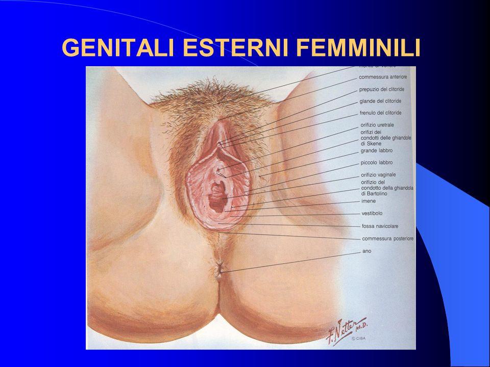 BASALIOMA Molto rara la localizzazione vulvare.Aspetto molto simile ad unulcera erosiva del viso.