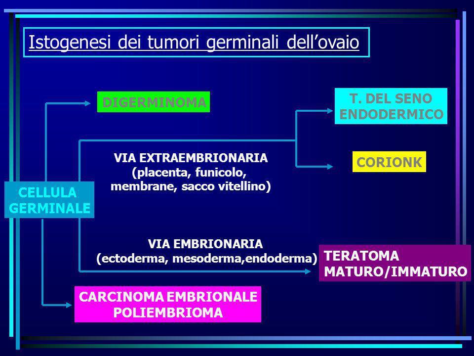 Istogenesi dei tumori germinali dellovaio VIA EXTRAEMBRIONARIA (placenta, funicolo, membrane, sacco vitellino) CELLULA GERMINALE DIGERMINOMA CARCINOMA