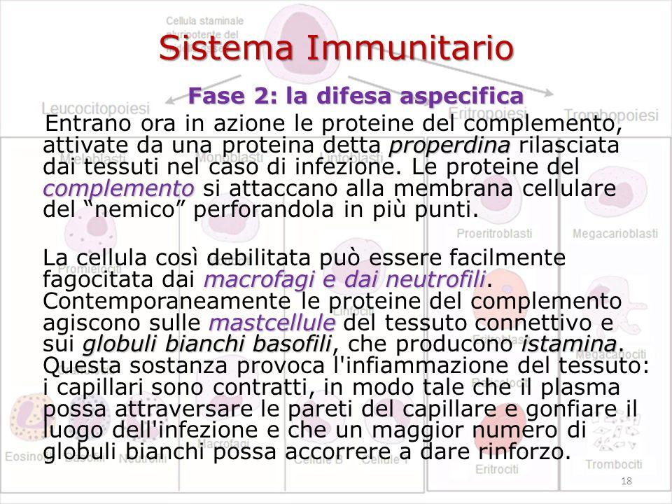 Sistema Immunitario Fase 2: la difesa aspecifica Fase 2: la difesa aspecifica properdina complemento Entrano ora in azione le proteine del complemento