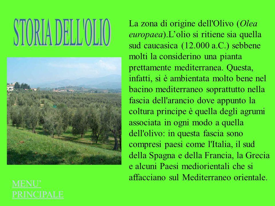 La zona di origine dell'Olivo (Olea europaea).Lolio si ritiene sia quella sud caucasica (12.000 a.C.) sebbene molti la considerino una pianta prettame