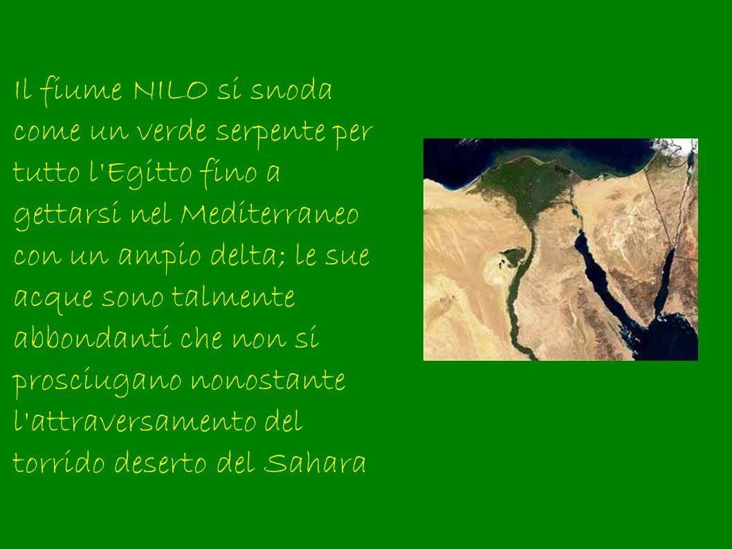 Il fiume NILO si snoda come un verde serpente per tutto l'Egitto fino a gettarsi nel Mediterraneo con un ampio delta; le sue acque sono talmente abbon
