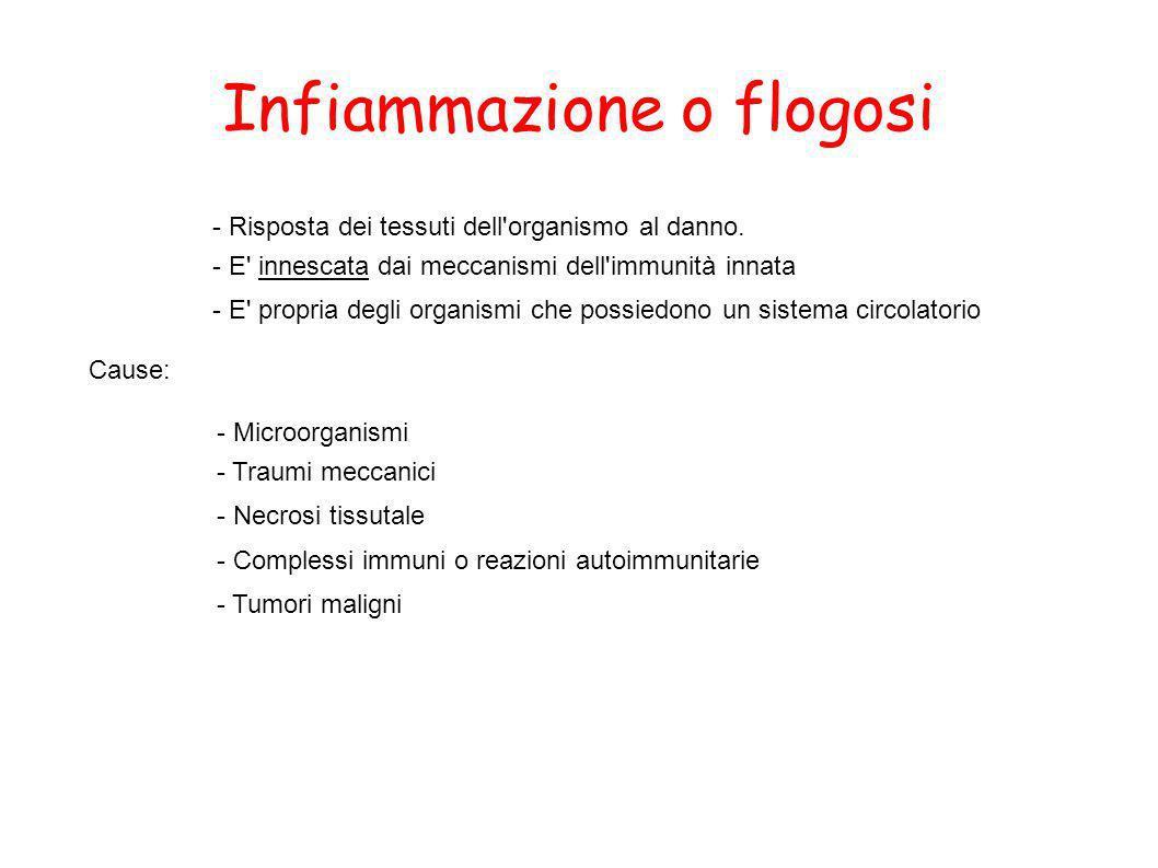 Infiammazione o flogosi - Risposta dei tessuti dell'organismo al danno. - E' innescata dai meccanismi dell'immunità innata - E' propria degli organism