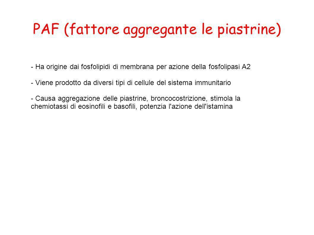 PAF (fattore aggregante le piastrine) - Ha origine dai fosfolipidi di membrana per azione della fosfolipasi A2 - Viene prodotto da diversi tipi di cel