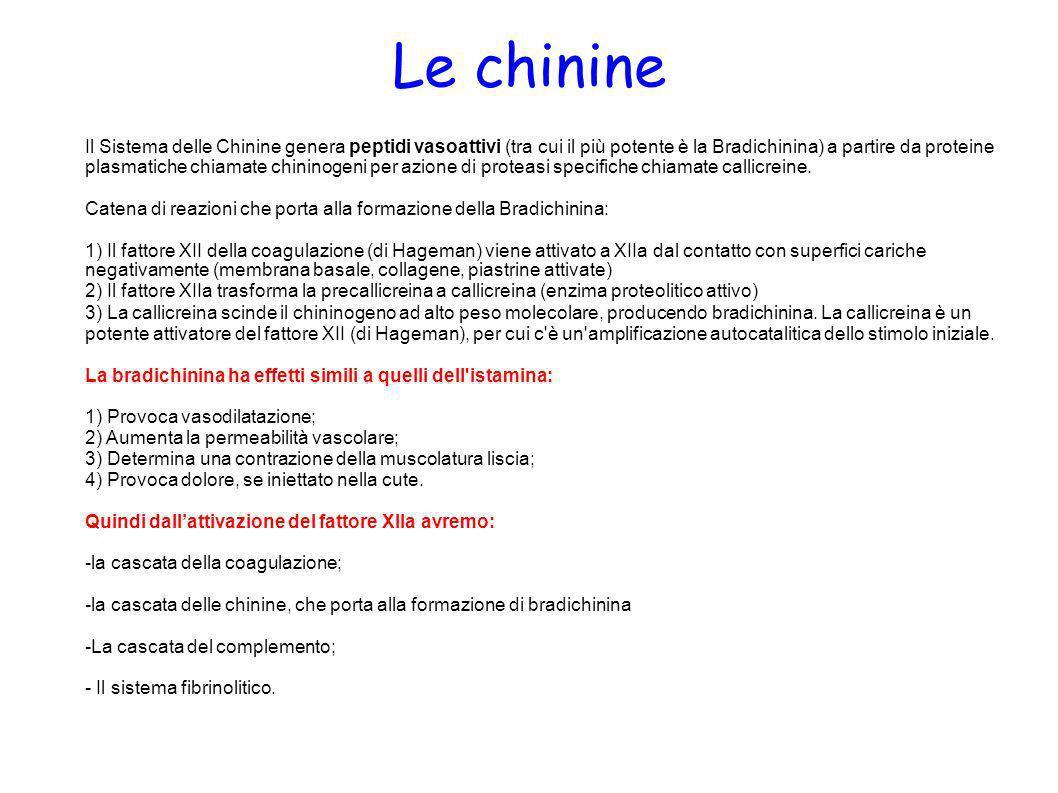 Le chinine Il Sistema delle Chinine genera peptidi vasoattivi (tra cui il più potente è la Bradichinina) a partire da proteine plasmatiche chiamate ch
