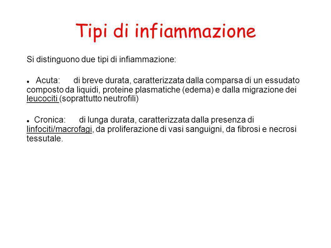 Tipi di infiammazione Si distinguono due tipi di infiammazione: Acuta: di breve durata, caratterizzata dalla comparsa di un essudato composto da liqui