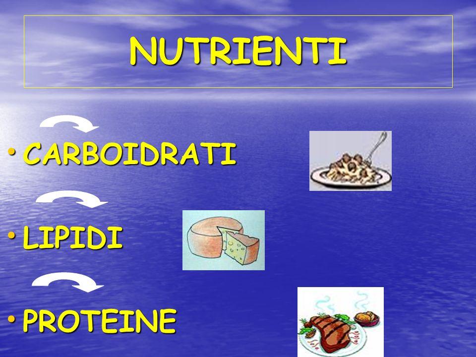 NUTRIENTI CARBOIDRATI CARBOIDRATI LIPIDI LIPIDI PROTEINE PROTEINE