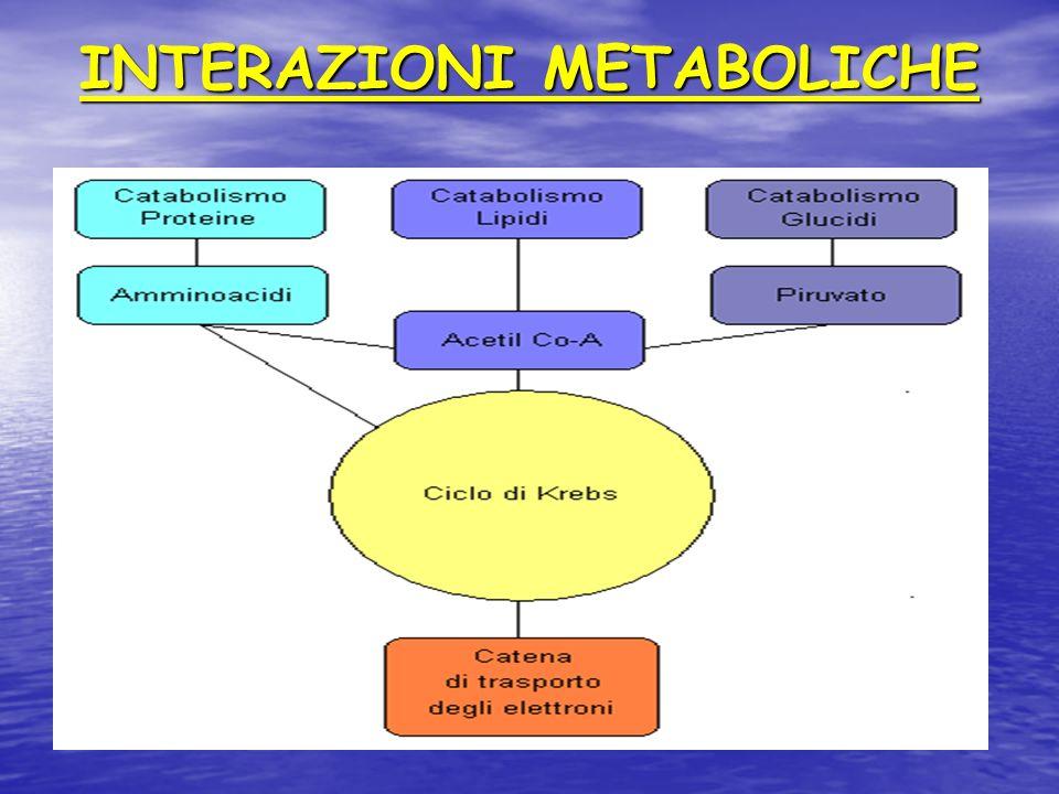 INTERAZIONI METABOLICHE