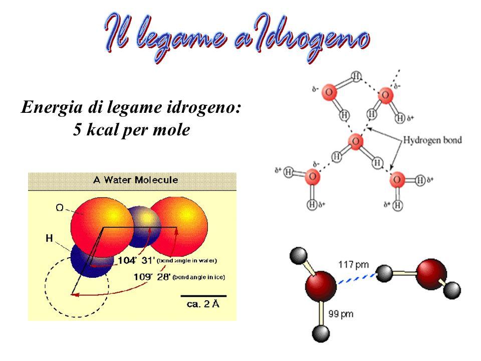 Energia di legame idrogeno: 5 kcal per mole