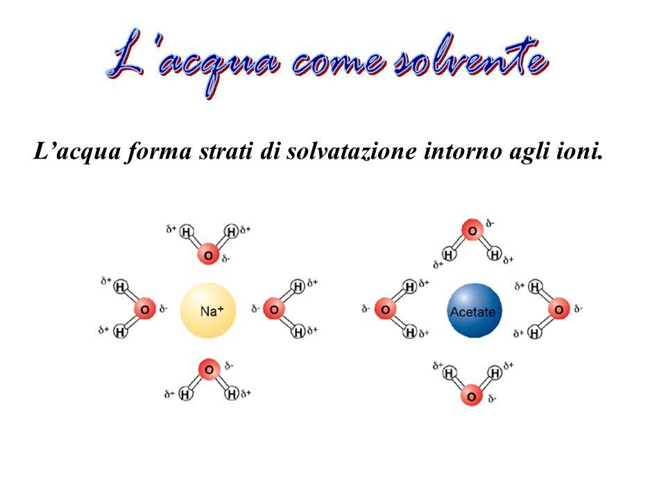 Lacqua forma strati di solvatazione intorno agli ioni.