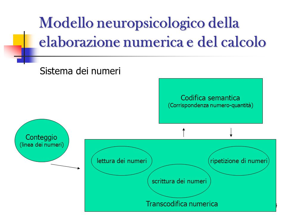 24 Modello neuropsicologico della elaborazione numerica e del calcolo Sistema dei numeri Conteggio (linea dei numeri) Codifica semantica (Corrisponden
