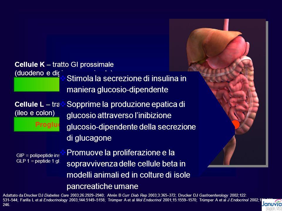 ProGIP GIP (1-42) Cellule K – tratto GI prossimale (duodeno e digiuno prossimale) Proglucagone GLP 1(7-37) GLP 1(7-36)NH 2 Cellule L – tratto GI distale (ileo e colon) GIP = polipeptide insulinotropico glucosio-dipendente GLP 1 = peptide 1 glucagone-simile Stimola la secrezione di insulina in maniera glucosio-dipendente Sopprime la produzione epatica di glucosio attraverso linibizione glucosio-dipendente della secrezione di glucagone Promuove la proliferazione e la sopravvivenza delle cellule beta in modelli animali ed in colture di isole pancreatiche umane Adattato da Drucker DJ Diabetes Care 2003;26:2929–2940; Ahrén B Curr Diab Rep 2003;3:365–372; Drucker DJ Gastroenterology 2002;122: 531–544; Farilla L et al Endocrinology 2003;144:5149–5158; Trümper A et al Mol Endocrinol 2001;15:1559–1570; Trümper A et al J Endocrinol 2002;174:233– 246.