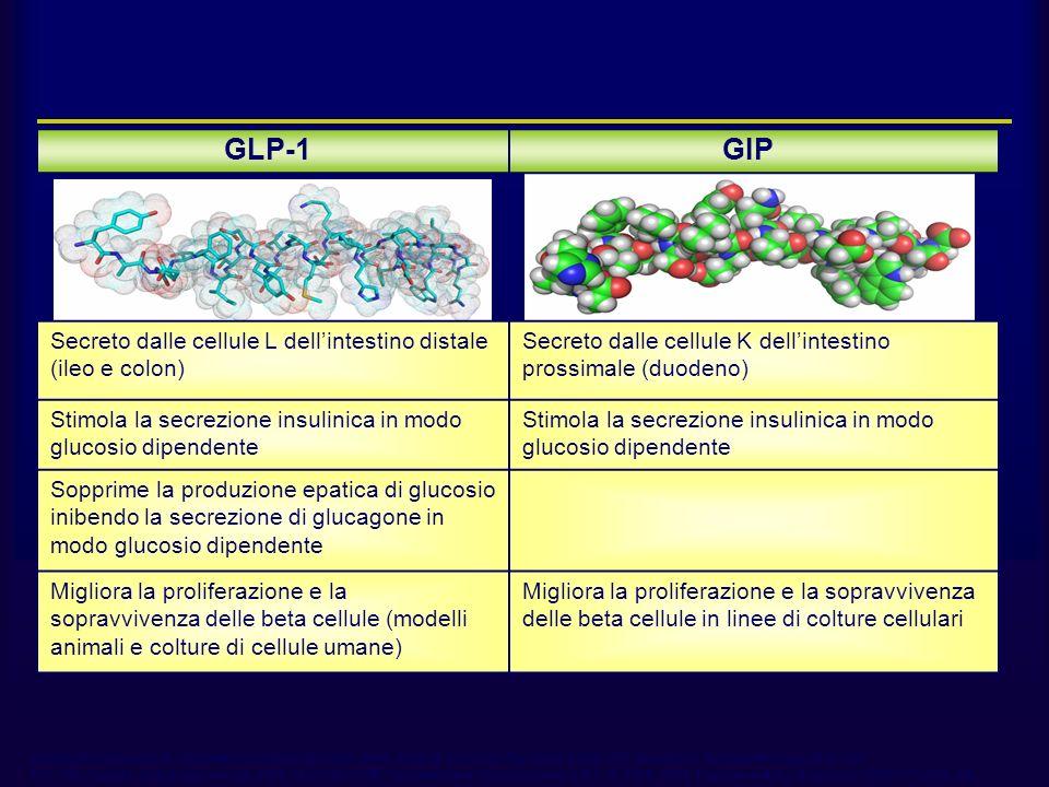 GLP-1GIP Secreto dalle cellule L dellintestino distale (ileo e colon) Secreto dalle cellule K dellintestino prossimale (duodeno) Stimola la secrezione insulinica in modo glucosio dipendente Sopprime la produzione epatica di glucosio inibendo la secrezione di glucagone in modo glucosio dipendente Migliora la proliferazione e la sopravvivenza delle beta cellule (modelli animali e colture di cellule umane) Migliora la proliferazione e la sopravvivenza delle beta cellule in linee di colture cellulari GLP-1 e GIP Adapted from Drucker DJ Diabetes Care 2003;26:2929–2940; Ahrén B Curr Diab Rep 2003;3:365–372; Drucker DJ Gastroenterology 2002;122: 531–544; Farilla L et al Endocrinology 2003;144:5149–5158; Trümper A et al Mol Endocrinol 2001;15:1559–1570; Trümper A et al J Endocrinol 2002;174:233–246.