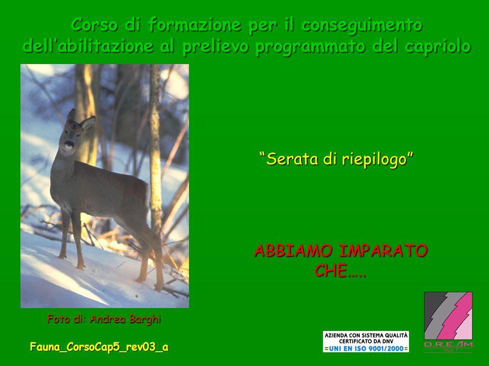 71.A CHE CLASSE DI ABBATTIMENTO APPARTIENE QUESTO CAPRIOLO.