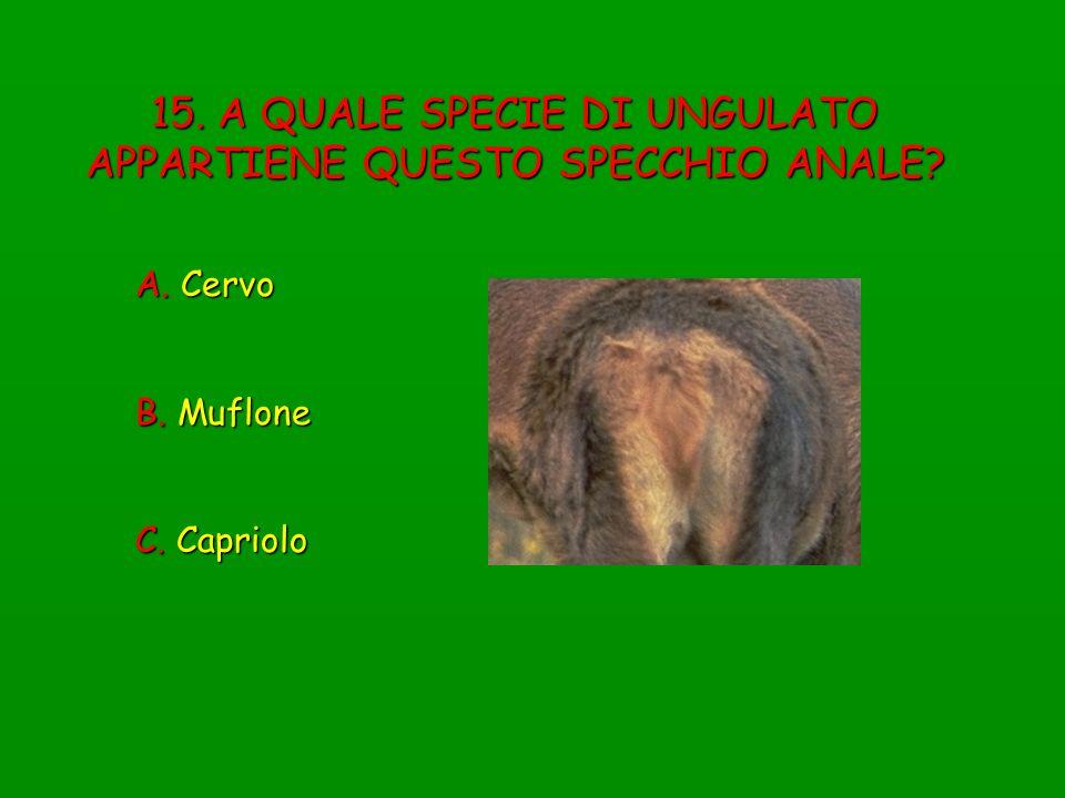15. A QUALE SPECIE DI UNGULATO APPARTIENE QUESTO SPECCHIO ANALE? A. Cervo B. Muflone C. Capriolo