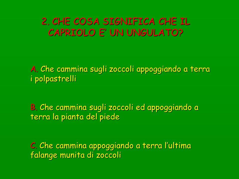 73.A CHE CLASSE DI ABBATTIMENTO APPARTIENE QUESTO CAPRIOLO.