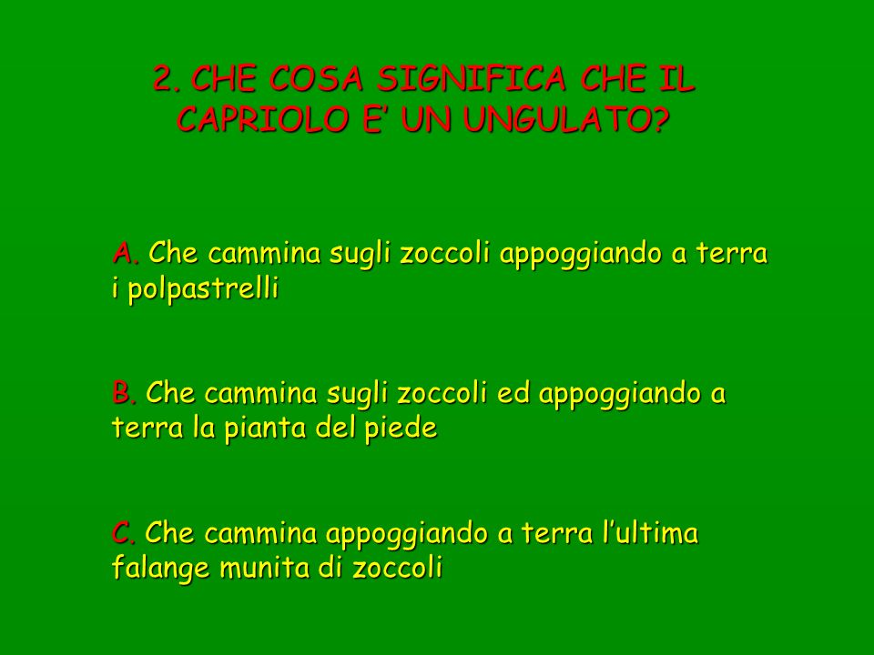 3. IL CAPRIOLO E…. A. Un Artiodattilo B. Un Suiforme C. Un Perissodattilo