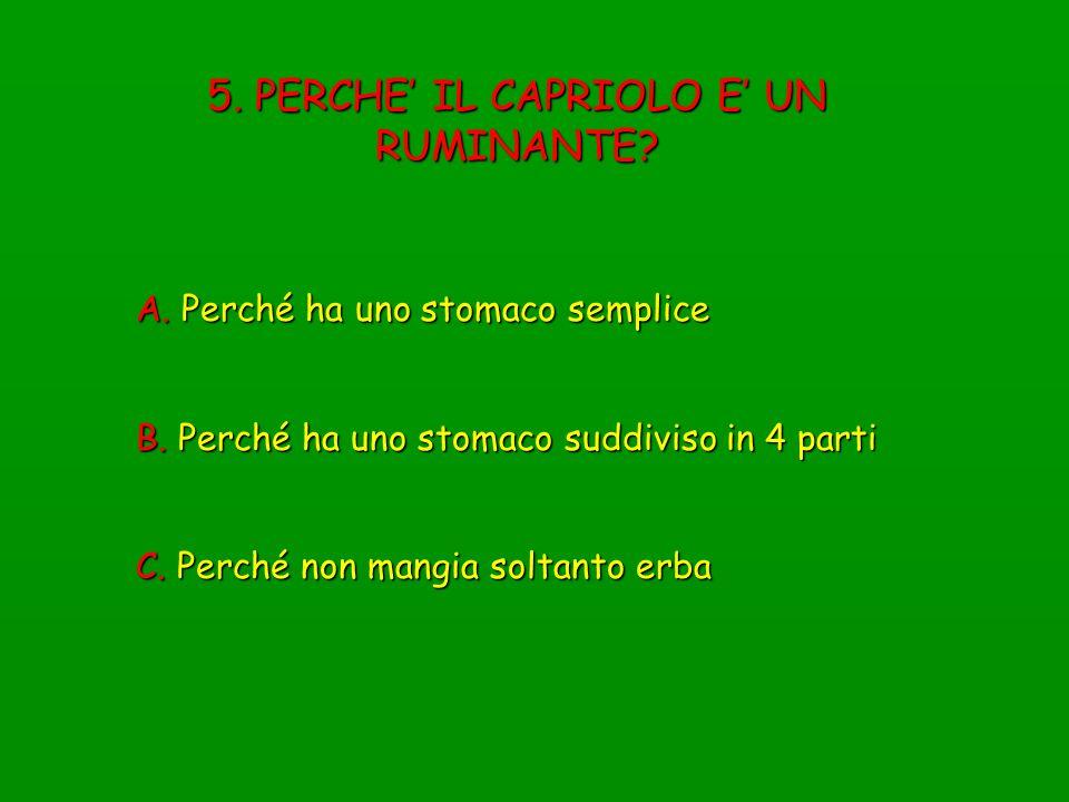 16. A QUALE SPECIE DI UNGULATO APPARTIENE QUESTO SPECCHIO ANALE? A. Capriolo B. Cervo C. Muflone