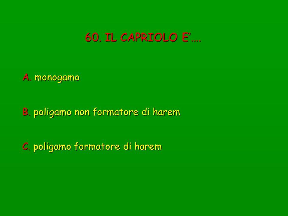 60. IL CAPRIOLO E…. A. monogamo B. poligamo non formatore di harem C. poligamo formatore di harem