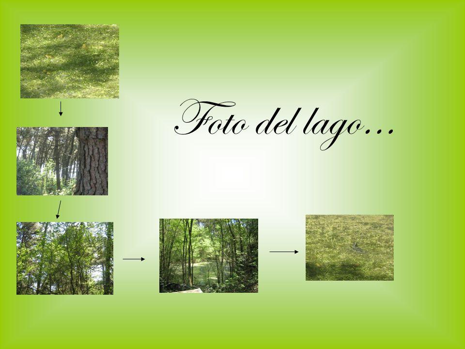 Allinterno abbiamo visto differenti piante Pino Marittimo: Pino Marittimo(pinus pinaster):dal pino marittimo si estrae la resina che serve per produrre acqua ragia e trementina.