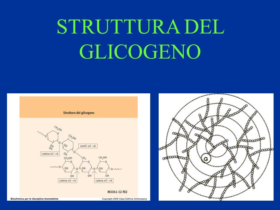 Biosintesi dellinsulina.Viene operata dalle cellule beta.