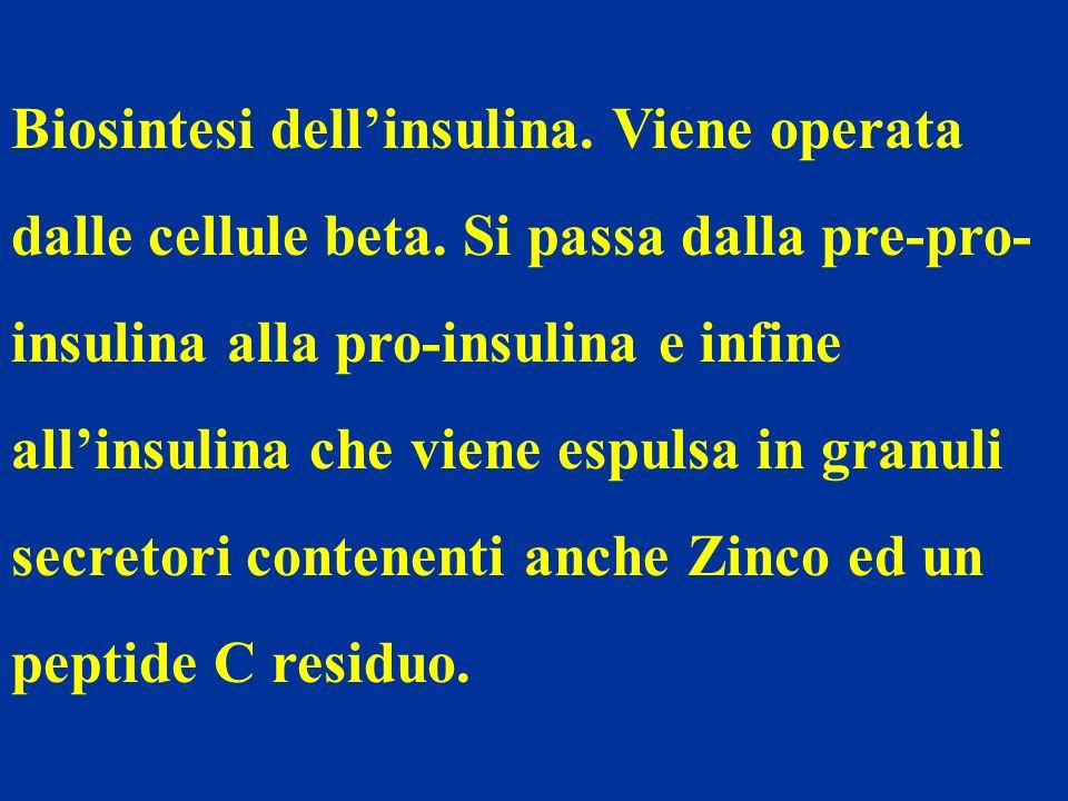 Biosintesi dellinsulina. Viene operata dalle cellule beta. Si passa dalla pre-pro- insulina alla pro-insulina e infine allinsulina che viene espulsa i