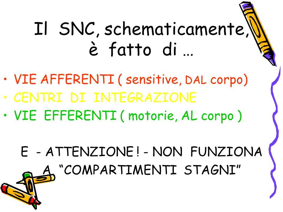 Il SNC, schematicamente, è fatto di … VIE AFFERENTI ( sensitive, DAL corpo) CENTRI DI INTEGRAZIONE VIE EFFERENTI ( motorie, AL corpo ) E - ATTENZIONE