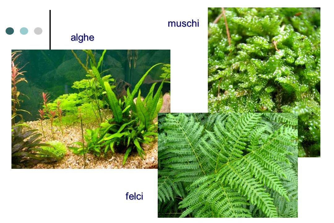 felci alghe muschi