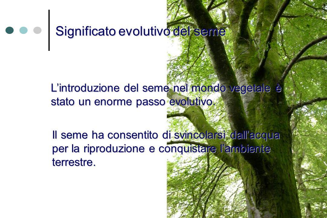 Significato evolutivo del seme Lintroduzione del seme nel mondo vegetale è stato un enorme passo evolutivo. Il seme ha consentito di svincolarsi dalla