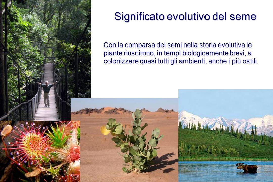 Significato evolutivo del seme Con la comparsa dei semi nella storia evolutiva le piante riuscirono, in tempi biologicamente brevi, a colonizzare quas